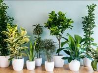 TOP 15 bedste indendørs planter til hjemmet