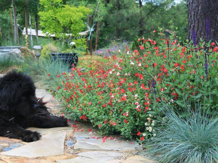dp_katrina-Fairchild-Sommerhus-udendørs-terrasse-blomst-bed_s4x3-jpg-rend-hgtvcom-1280-960
