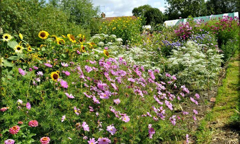 Sommerhus-haven-blomster-til-salg-Norfolk