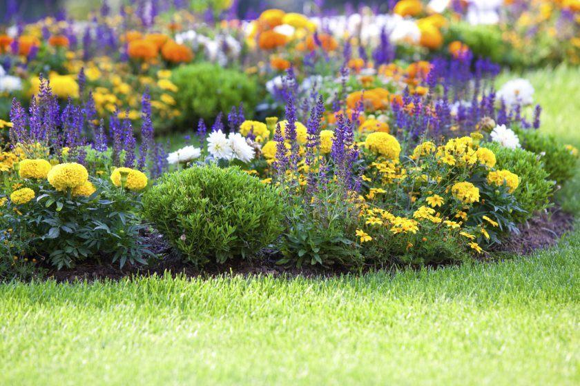 blomst-garden2