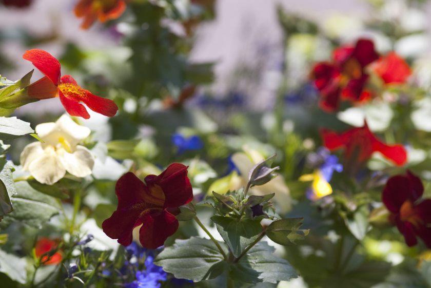 blomster i en hytte have blomsterbed