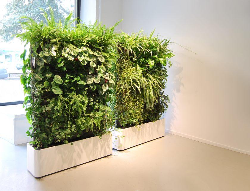 Moving_hedge_skanegatan_2
